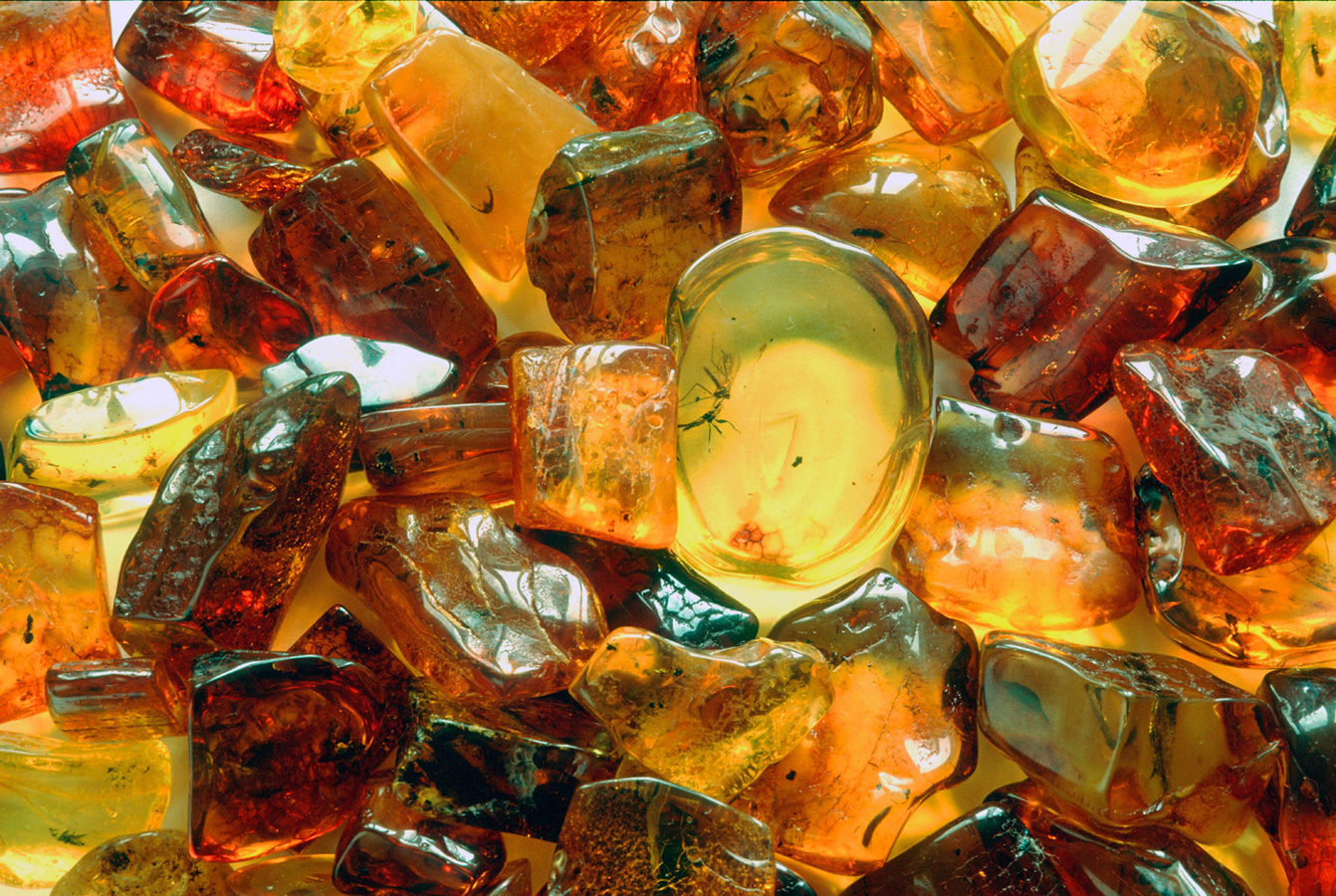 Prehistoric inclusions, such as insects and plants are often found in Baltic Sea amber