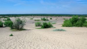 One of many wonders of Polish Jura, Bledow Desert