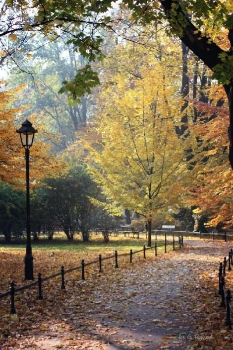 Planty in autumn scenery