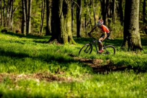 More advanced in Krakow cycling paths are located in Wolski Forest