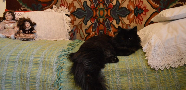 Resident cat of the Zwierzyniec House